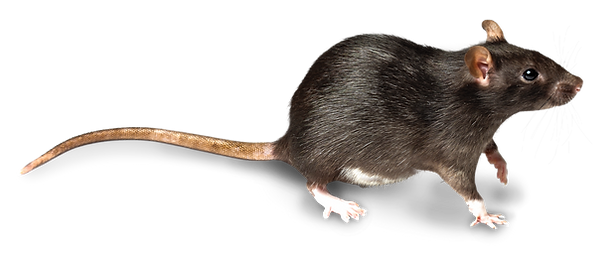 CO_RAT_edited.png