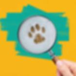 Animal Tracks.jpg