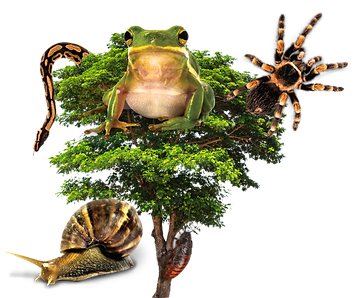 ANIMALS IN TREE.png