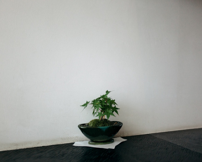 SAKURAI TEA EXPERIENCE