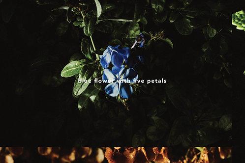 """Blue Flower With Five Petals"" Print"