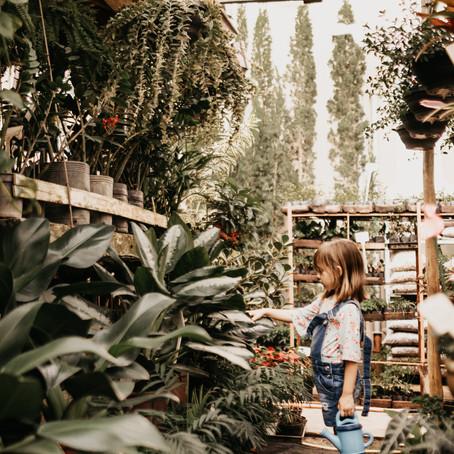 איך להיות הורים טובים לצמחים יפים:        5 שלבים להכנסת הטבע הביתה