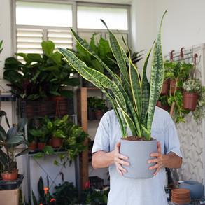 כך תשקמו את מערכת היחסים עם הצמחים שלכם