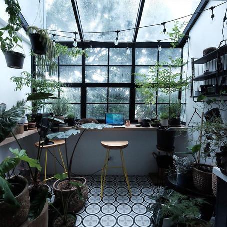 כיצד נהפוך את החורף לנעים יותר עבור הצמחים שלנו?