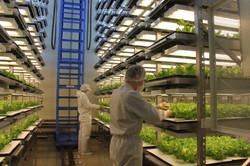 Multistage Indoor Farm