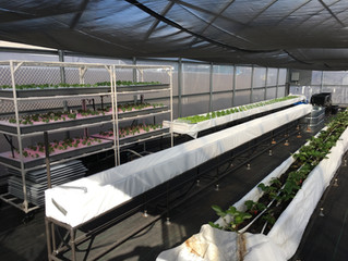 Our Farm : Aquaponics in Kona, Hawaii