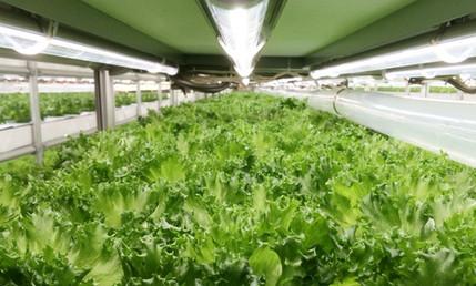 indoorfarm_haneda_5.jpg