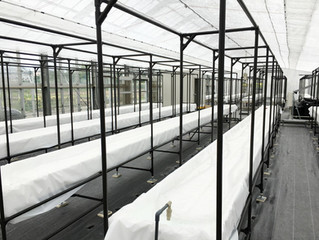 Our User : Set up Hydroponic Systems at Agricultural High School in Okinawa, Japan
