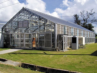 大屋根型温室.jpg