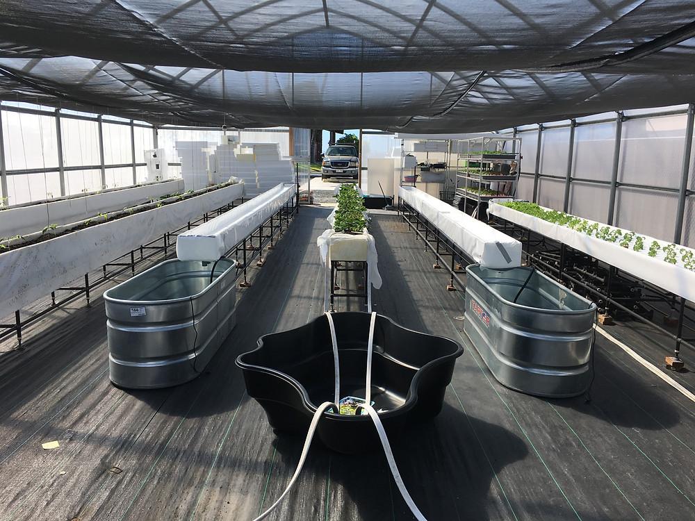 Aquaponics farm in Kona 2