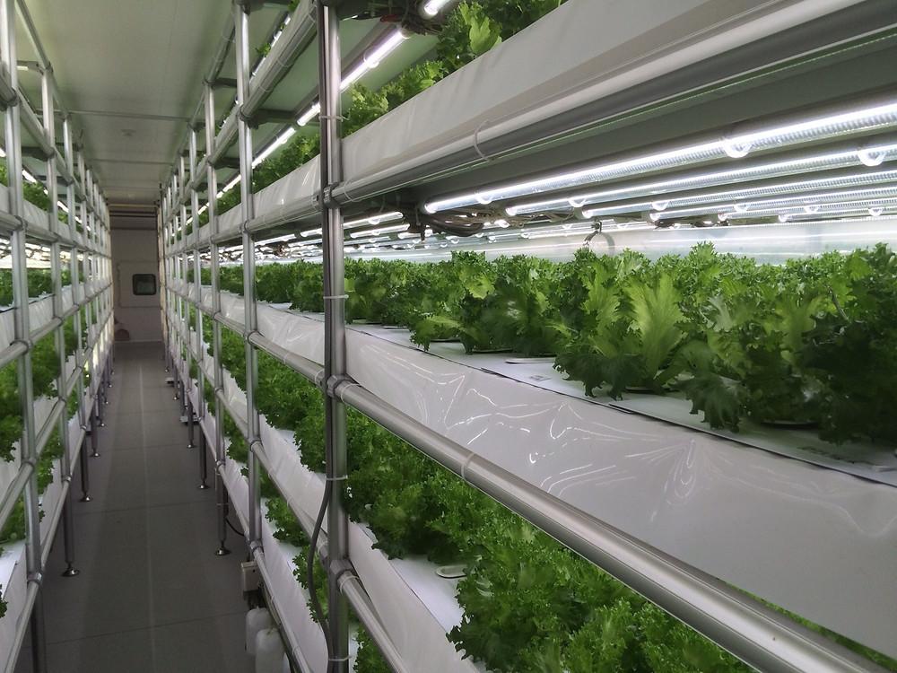 Indoor farm showroom in Tokyo