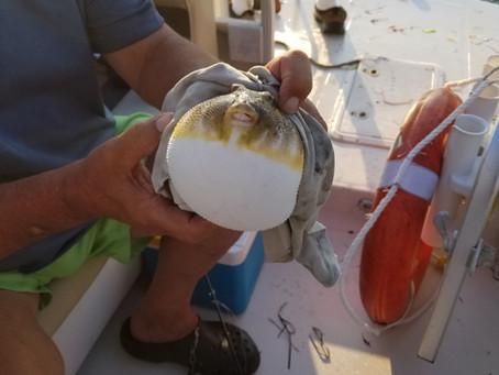 One Fish, Two Fish, Go Fish Blowfish!