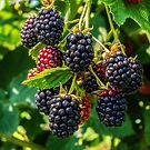 blackberries.jpeg