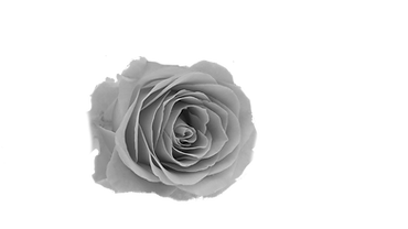 grey rose.png