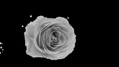 grey rose.png