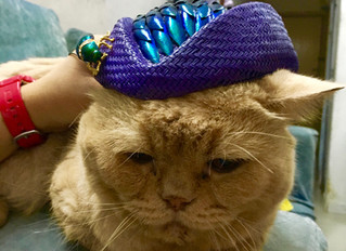 Hat for a Cat