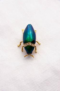Beetle Brooch