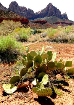 Zion Mountains, Desert Foliage
