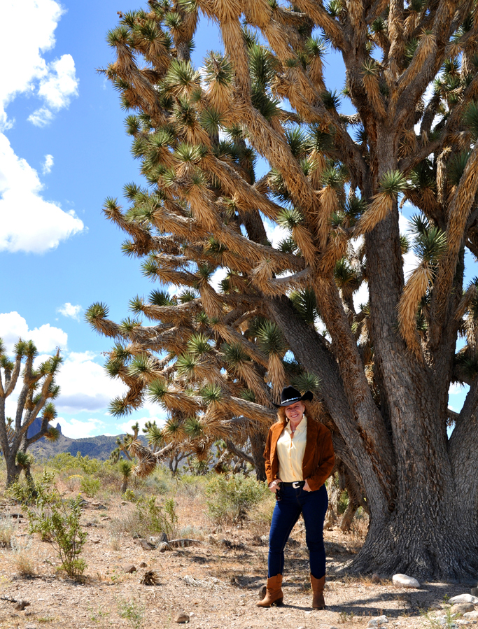 Joshua Tree Forest, Southwest desert