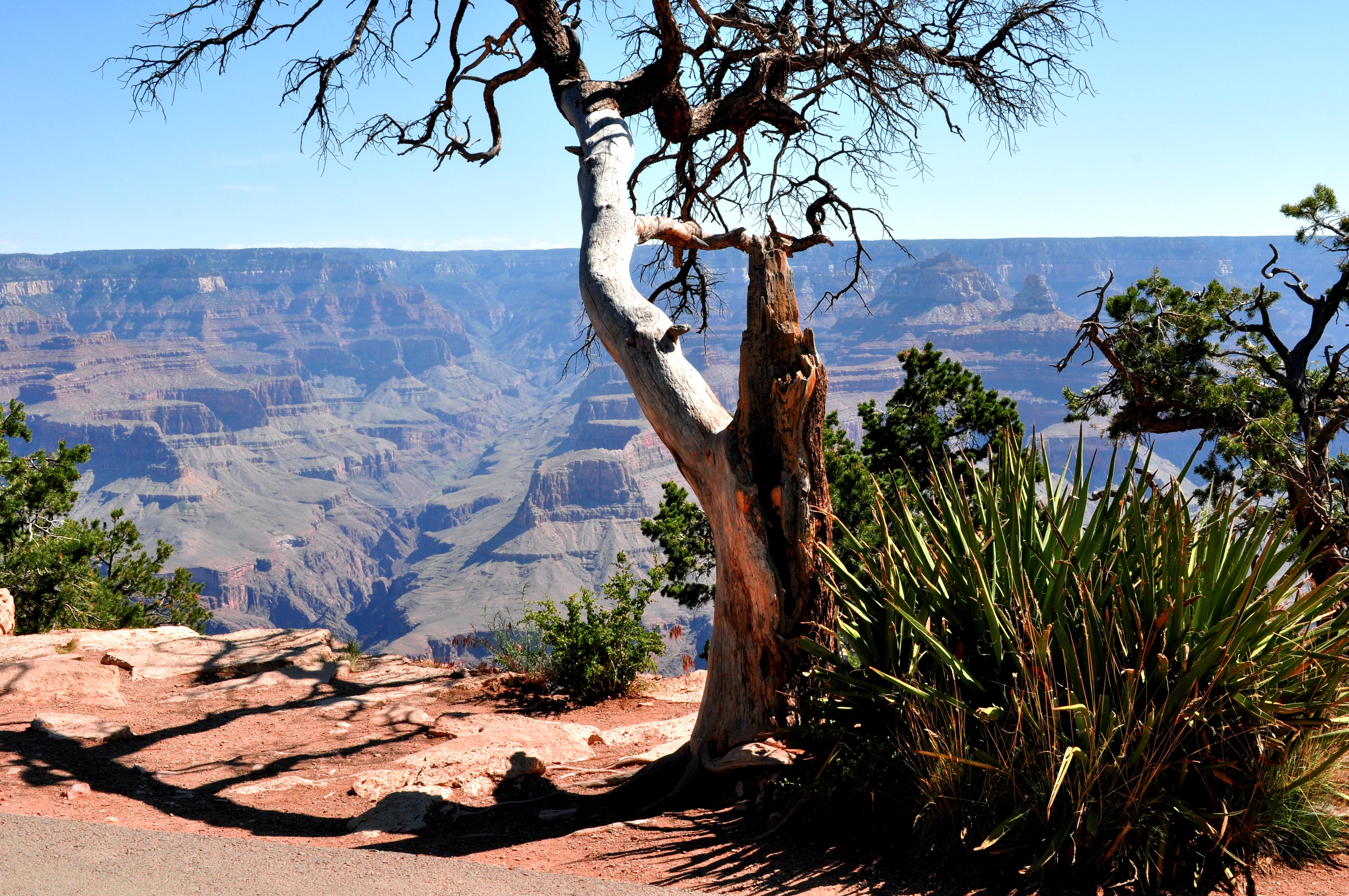 Rim Trail, Grand Canyon, Group Tours