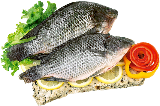 WholeCleanedTilapia_5.png