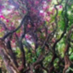 Рододендроны.jpg