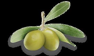 olive-oil copy_2.png