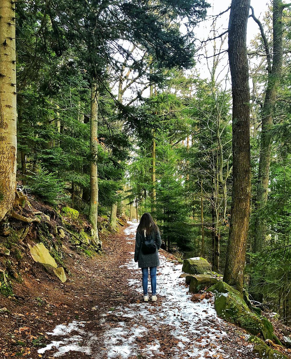 Ancrage, forêt