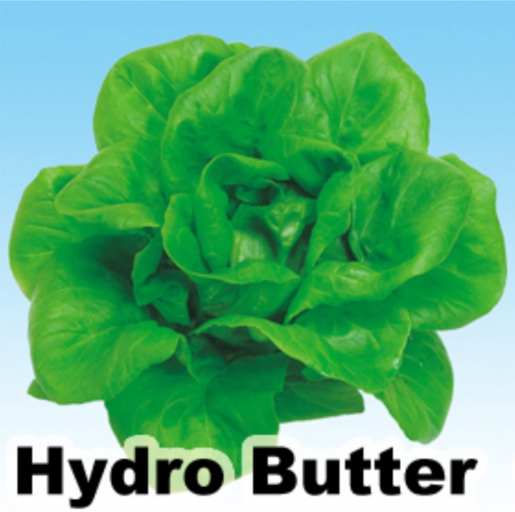 hydro butter