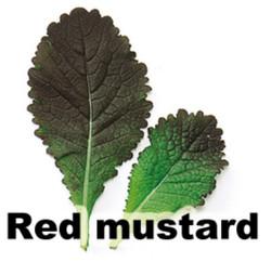 red mustard