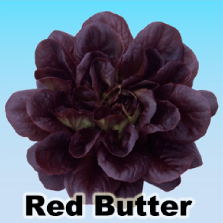 red butter