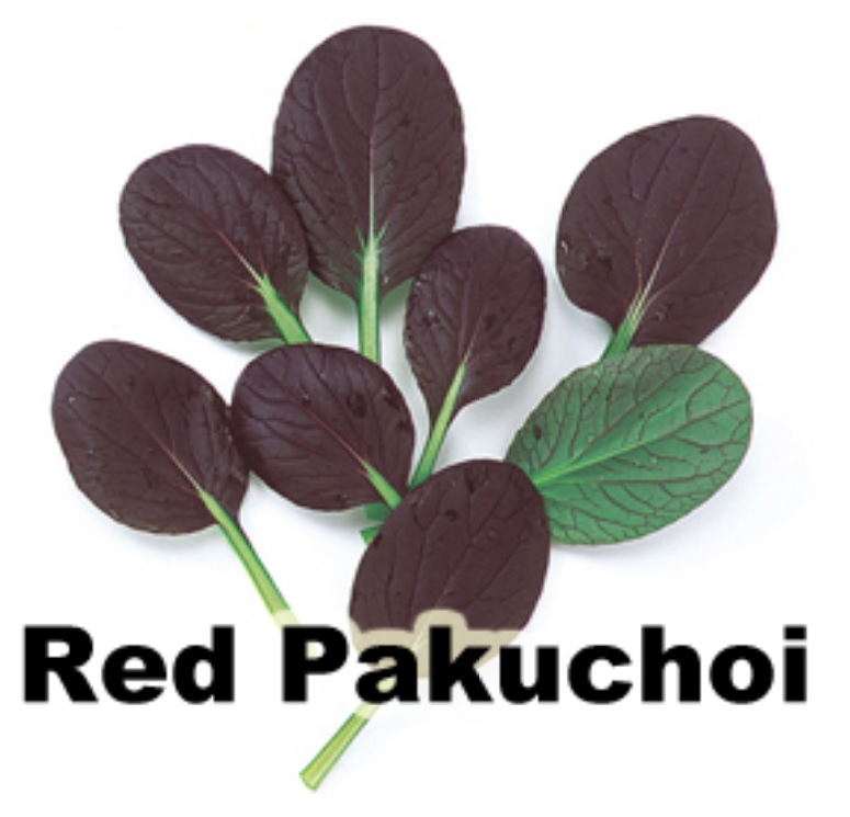 red pakuchoi