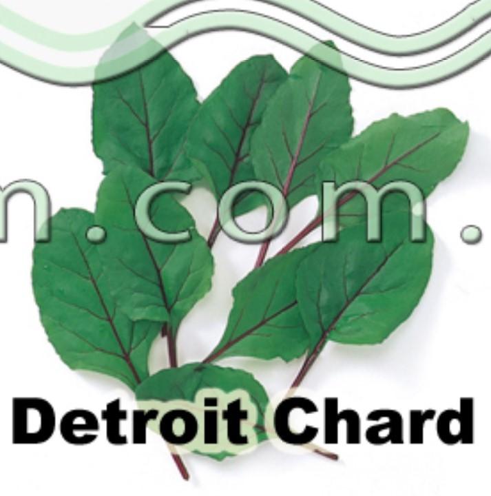 detroit chard