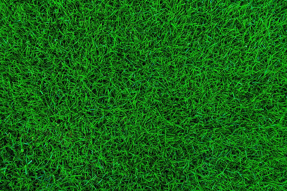 Nature green grass background top view.j