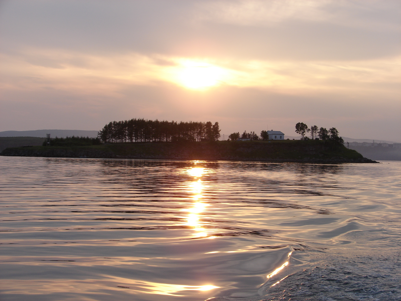 О.Устрица в заливе Советская (Императорс