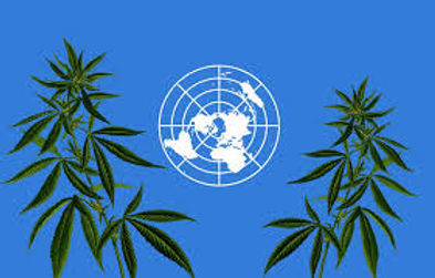 United Nations Approves WHO Recommendation to Reschedule Cannabis in Historic Vote - via MJBiz Daily