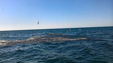 chasse de poisson en mer d'iroise, guide de peche brest, peche finistere , brest, finistere, bretagne