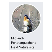 Midland-Penetanguishene Field Naturalists