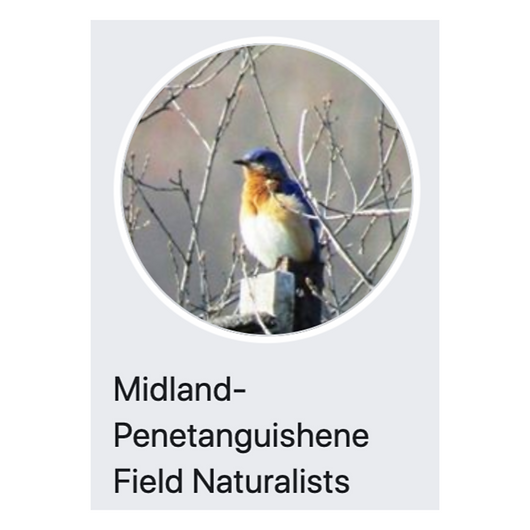 Midland-Penetanguishene Field Naturalists