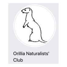 Orillia Naturalists Club