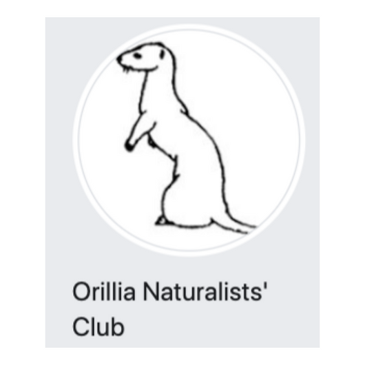 Orillia Naturalists Club