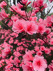 Candy-Colored Spring Blossoms