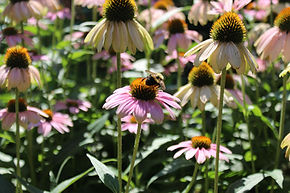 Don't Worry Bee Happy