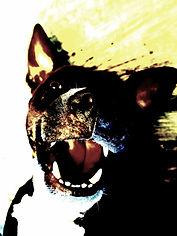 My Dog, Churro Bat