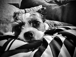 Cutest Dog on Earth