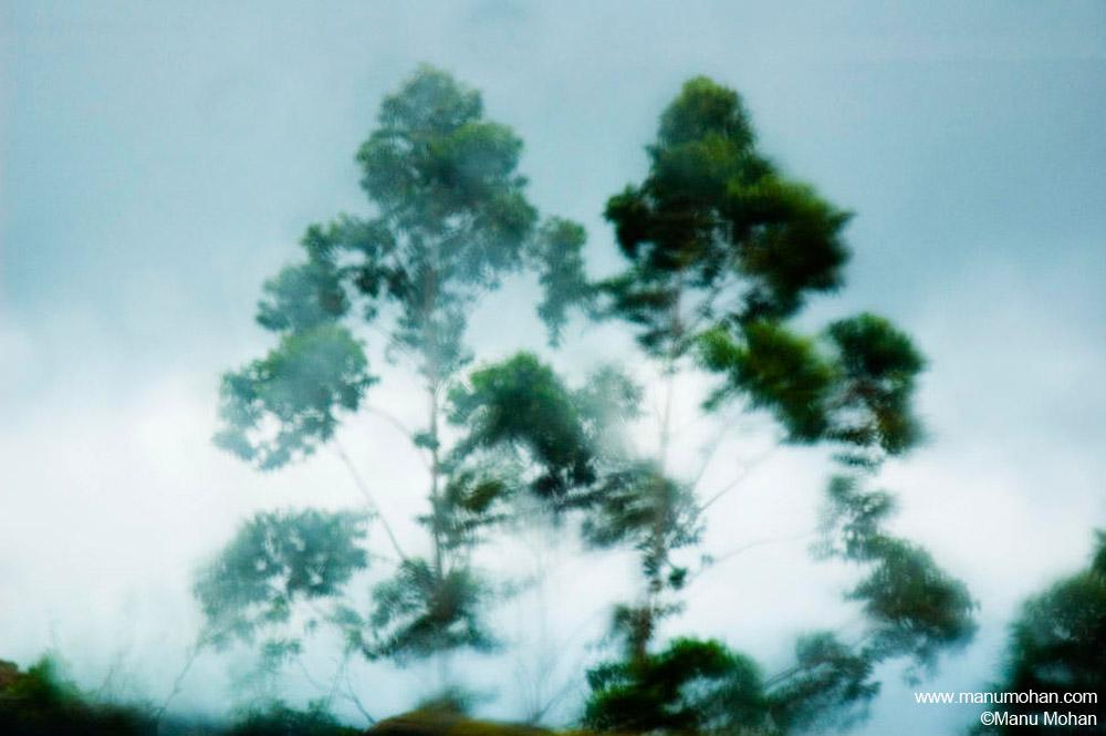 風の中の木