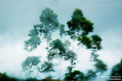 Les arbres dans le vent