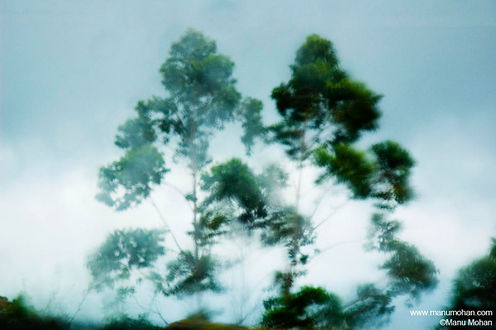 A blurred photo of green leaves on a pale gray sky