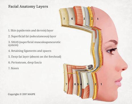 face-anatomy-layers-tissue.jpg