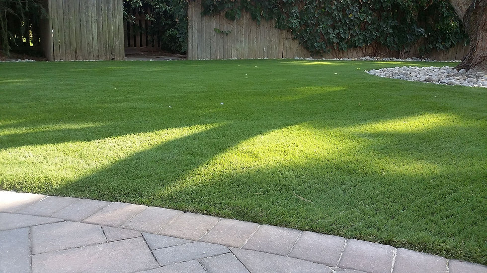 Synthetic Turf in Harbeson, Sussex County, DE